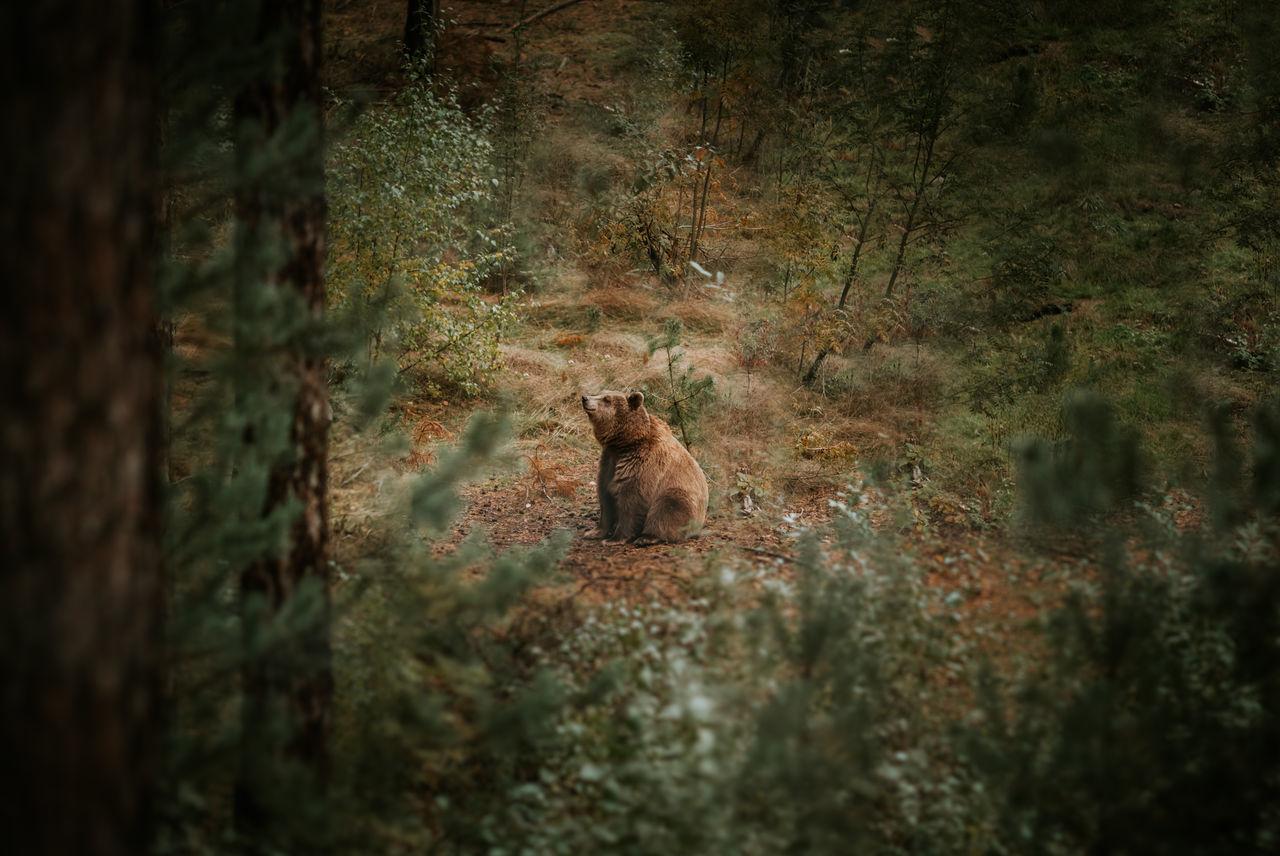 Beautiful stock photos of baer, Animal Themes, Animal Wildlife, Animals In The Wild, Bear