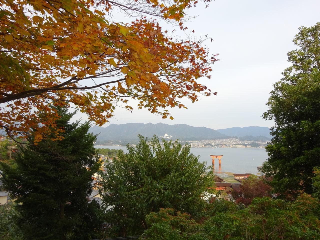 Day Landscape Nature Scenics Tree