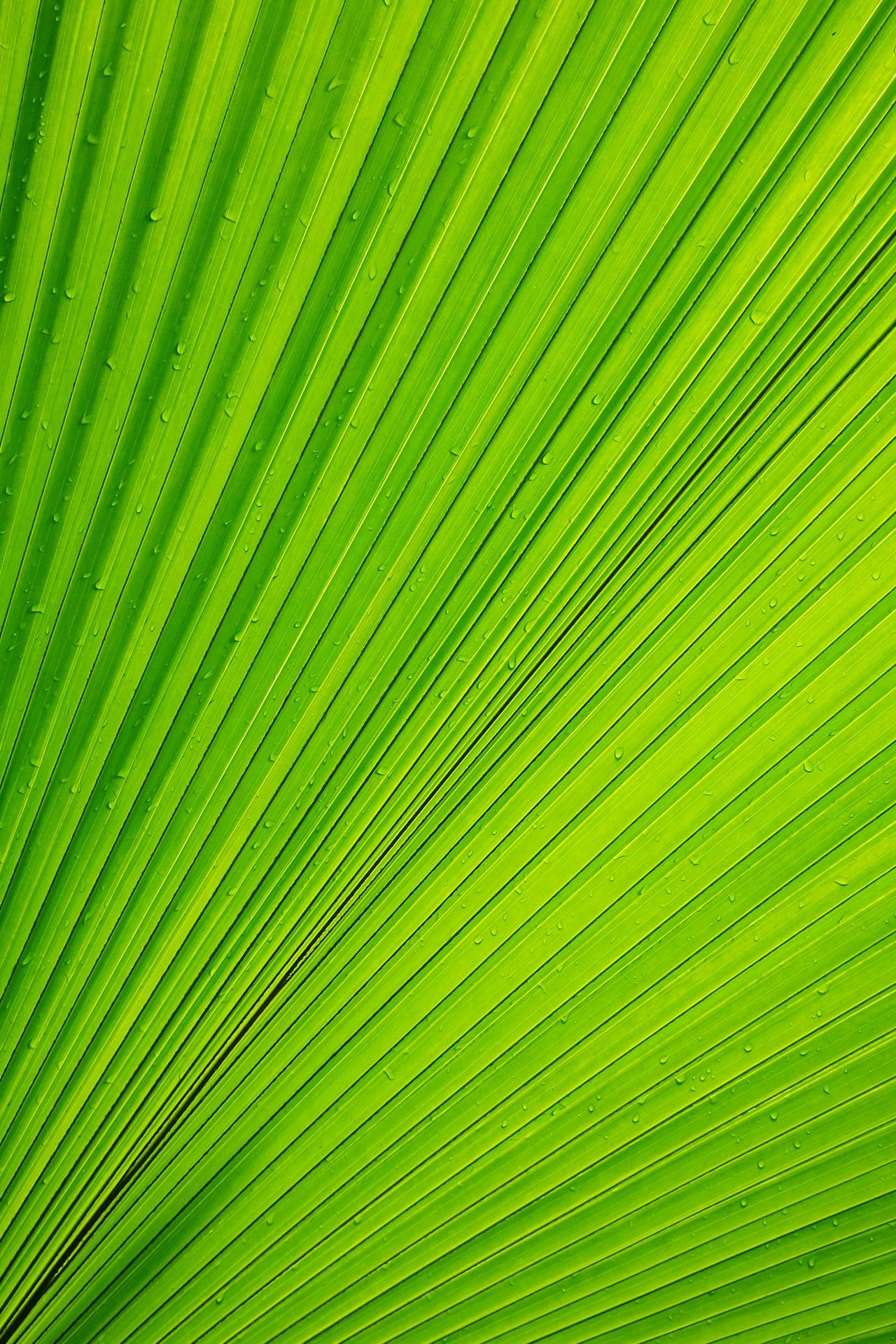 Beautiful stock photos of green, Backgrounds, Beauty In Nature, Day, Design
