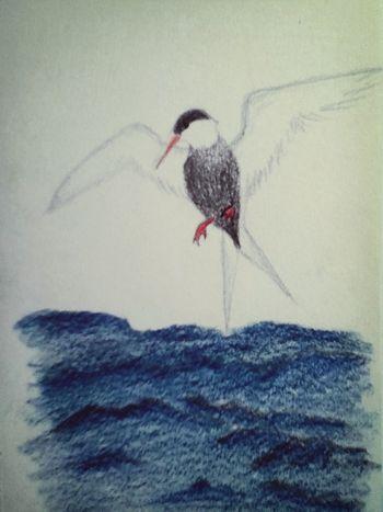 Seagull by me Handdrawntype