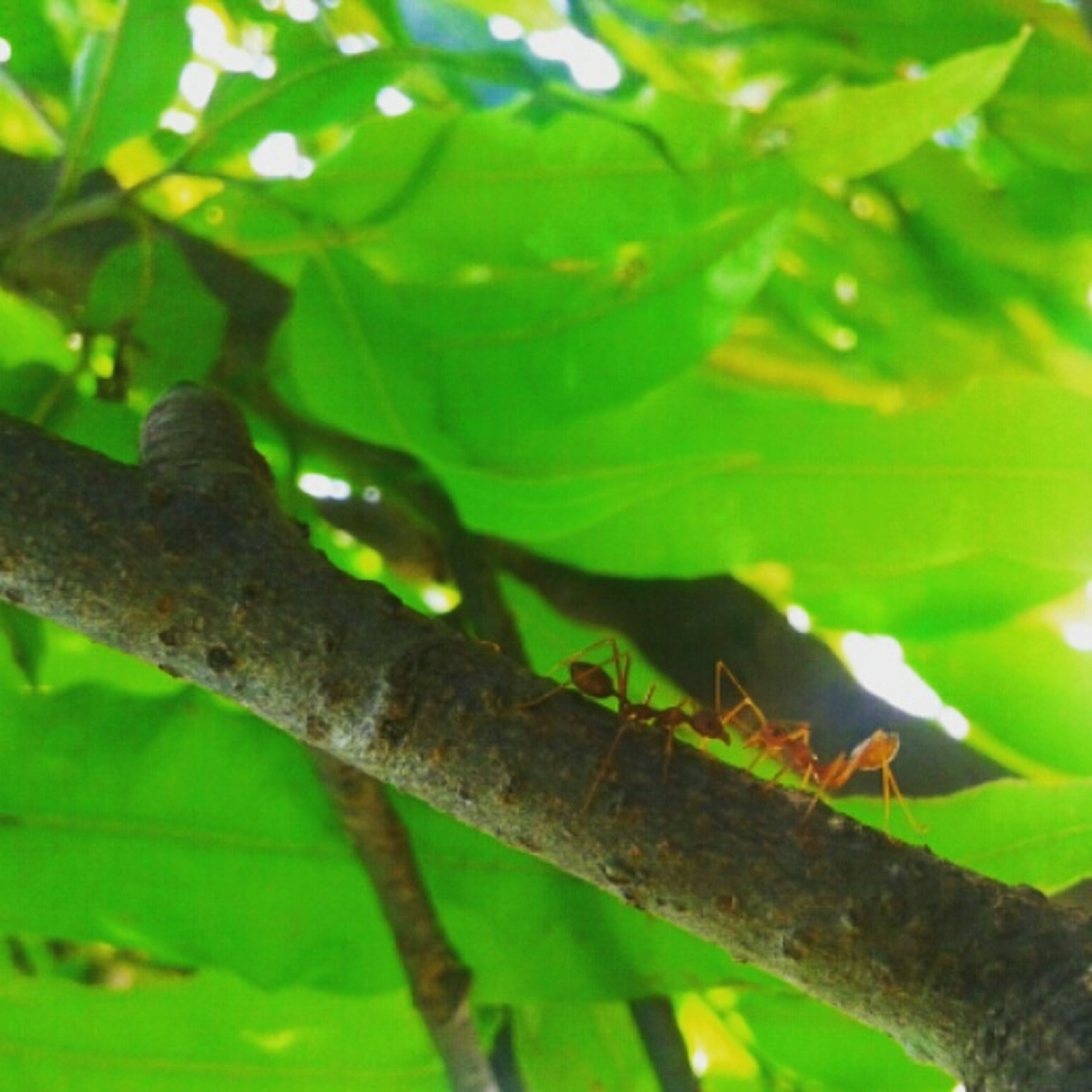 animal themes, animals in the wild, one animal, wildlife, leaf, green color, insect, close-up, nature, focus on foreground, plant, branch, growth, selective focus, outdoors, day, no people, perching, tree, zoology