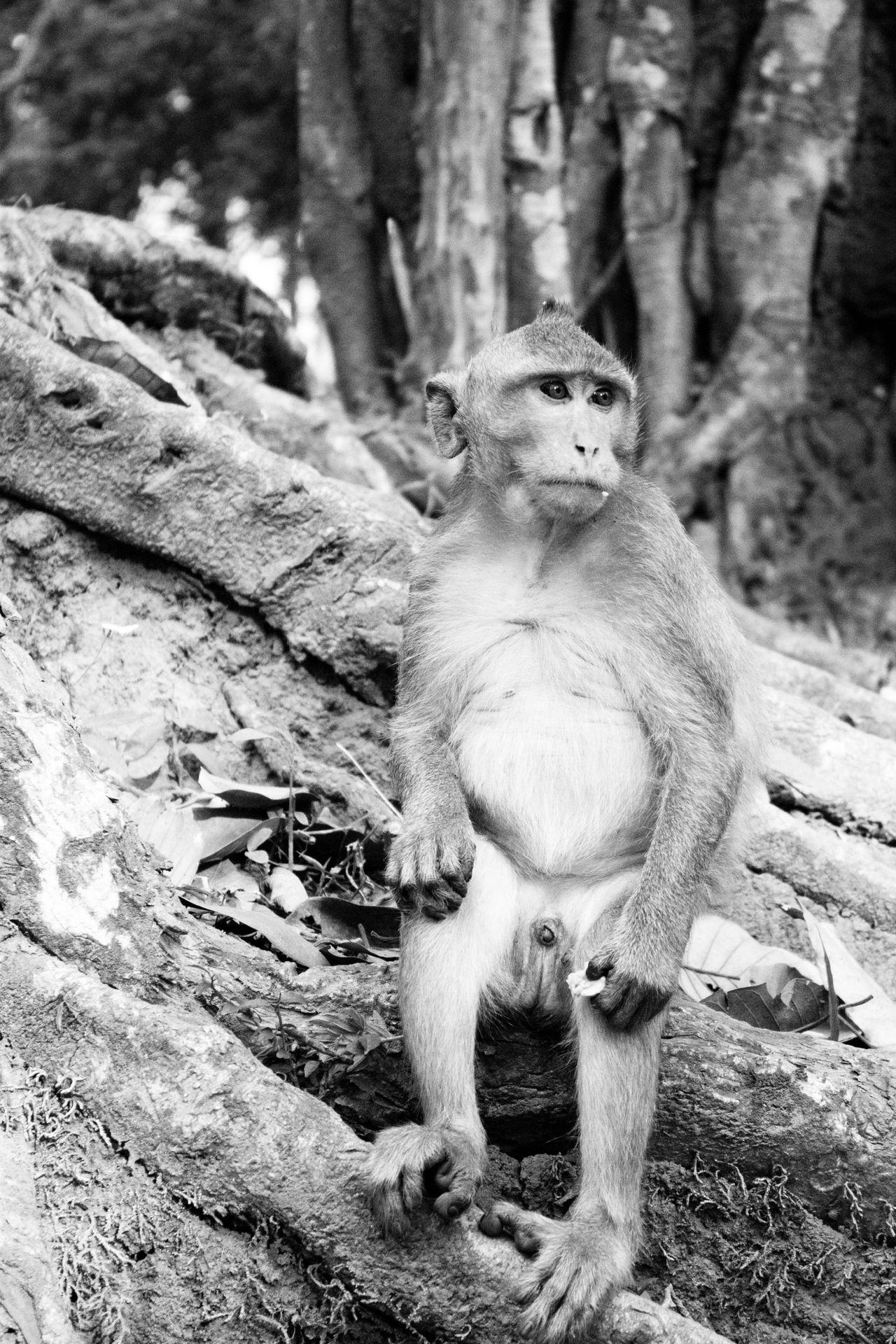 Monkey Little Monkey Wildlife Wildlife & Nature Blackandwhite Black And White Monkey Sitting Monkey Eating