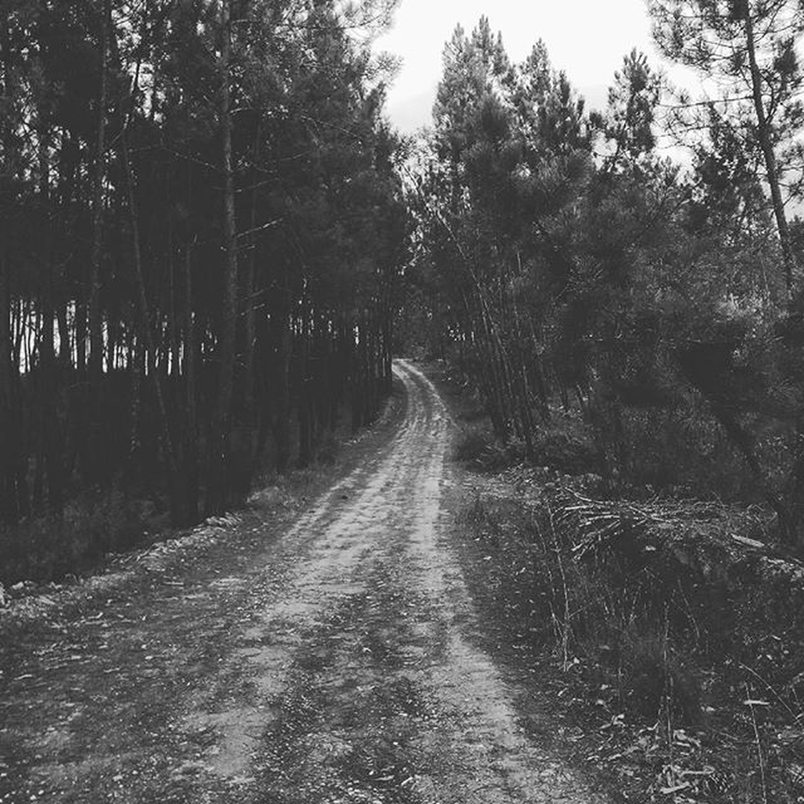 the way forward, tree, diminishing perspective, forest, vanishing point, tranquility, dirt road, nature, tranquil scene, growth, transportation, road, beauty in nature, landscape, non-urban scene, scenics, day, outdoors, no people, long