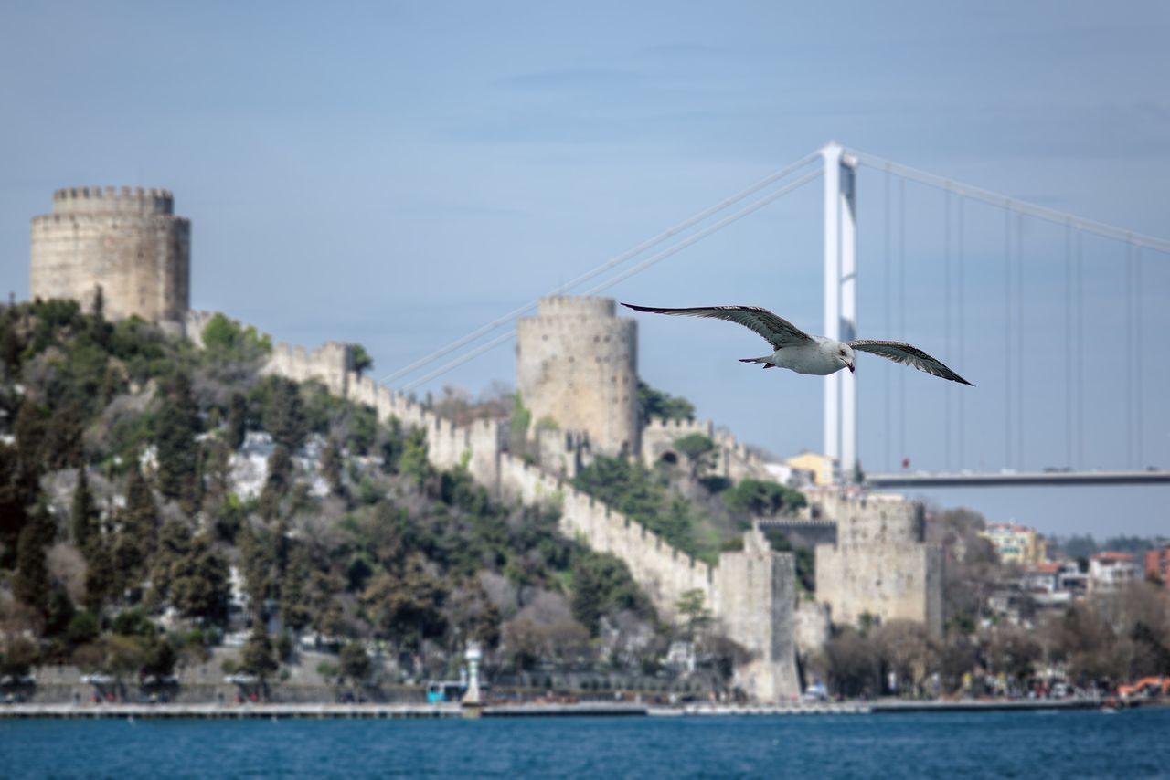 Seagull Flying Over River Against Sky