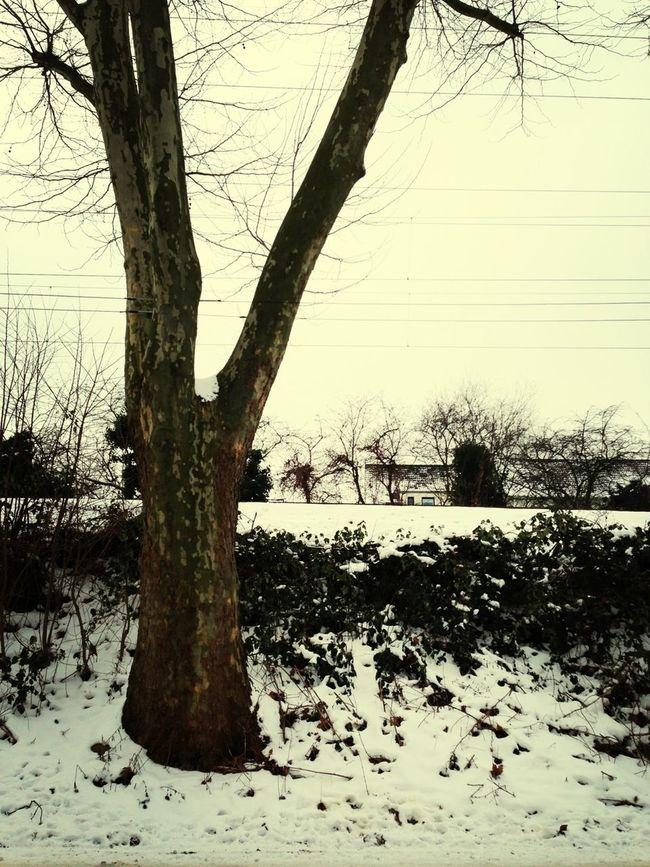 Taking Photos TreePorn Snow EyeEm Best Shots