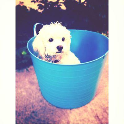 rommie♥ Ilovemydog Retro Hi! Enjoying Life