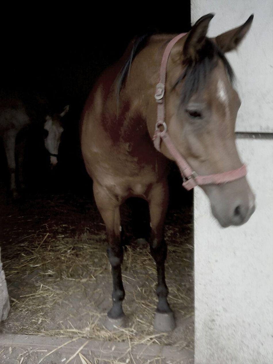 My Horse<33