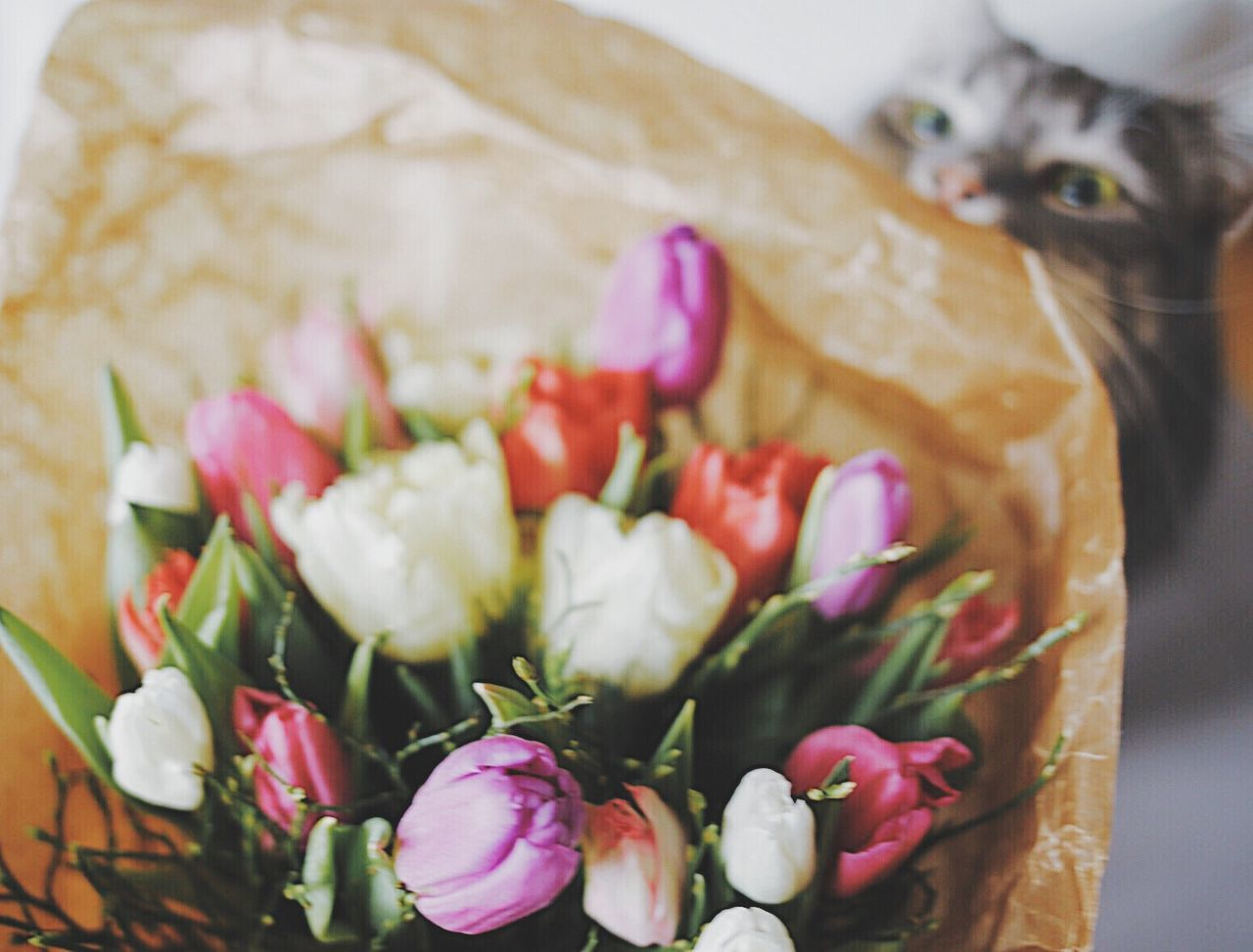 Flower No People Freshness Fragility Nature One Animal Close-up Pets Indoors  Animal Themes Mammal Domestic Animals Beauty In Nature Flower Head Day Funny Faces Funny Face Flower Collection Flower Arrangement Cute Cats Bouquet Tulip Multi Colored