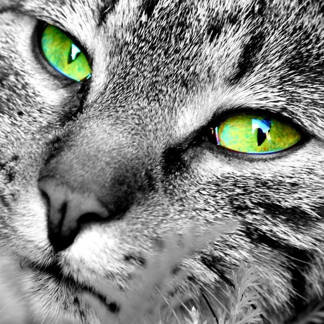 Cats Jessy & Friends EyeEm Best Shots