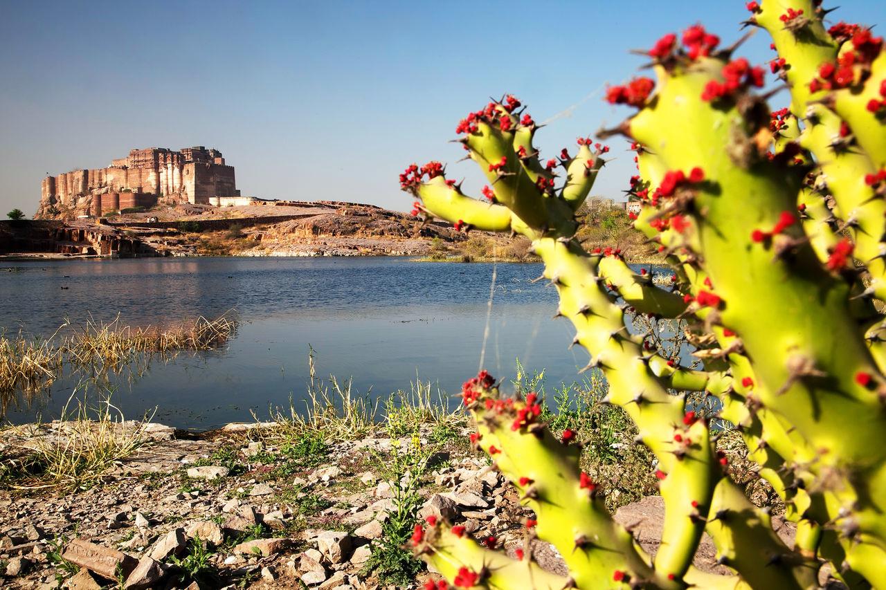 Fort India Jodhpur Jodhpur Rajasthan Landmark Landscape Mehrangarh Mehrangarh Fort Rajasthan Tourism Travel Travel Destinations Travel Photography