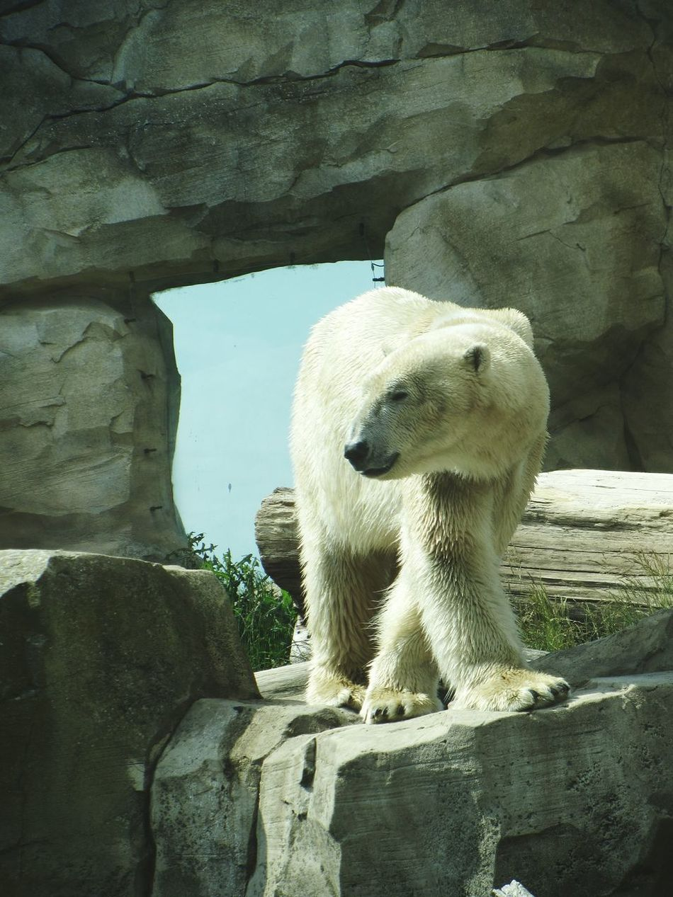 Beautiful stock photos of polar bear, Animal Themes, Animals In The Wild, Day, High Angle View