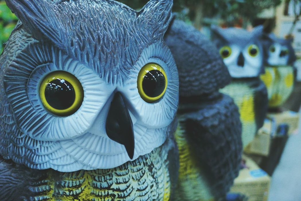 TheO Owl Bird Focus On Foreground No People Anthropomorphic Face Yellow Eyes Animal Themes Owl Eyes Owls Toys Scarecrow In The Form Of Rapacious Bird Scare Birds