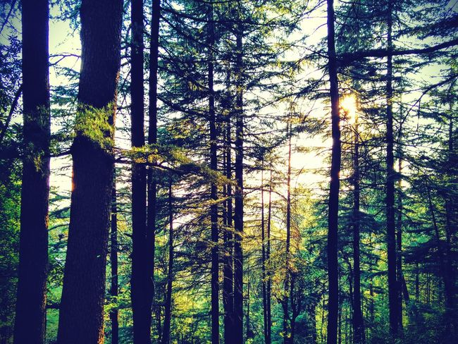 Into the woods. Treetastic Hills And Trees Tall Trees Valley View Incredible India, Himalayas