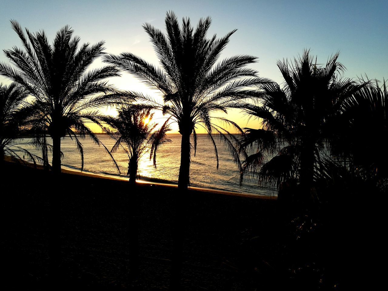 Palm Trees Sunrise Beach At Sunrise Golden Light Silhouettes Color Of Life My Year My View
