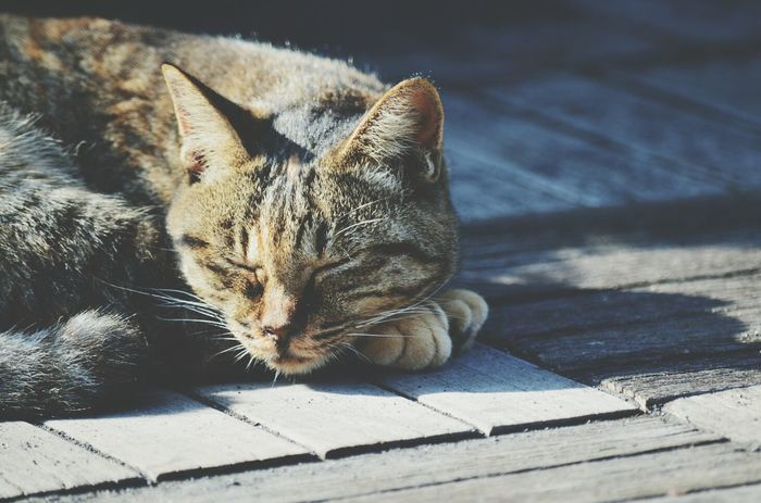 Catnap Relaxing Keicomoment Captured Moment
