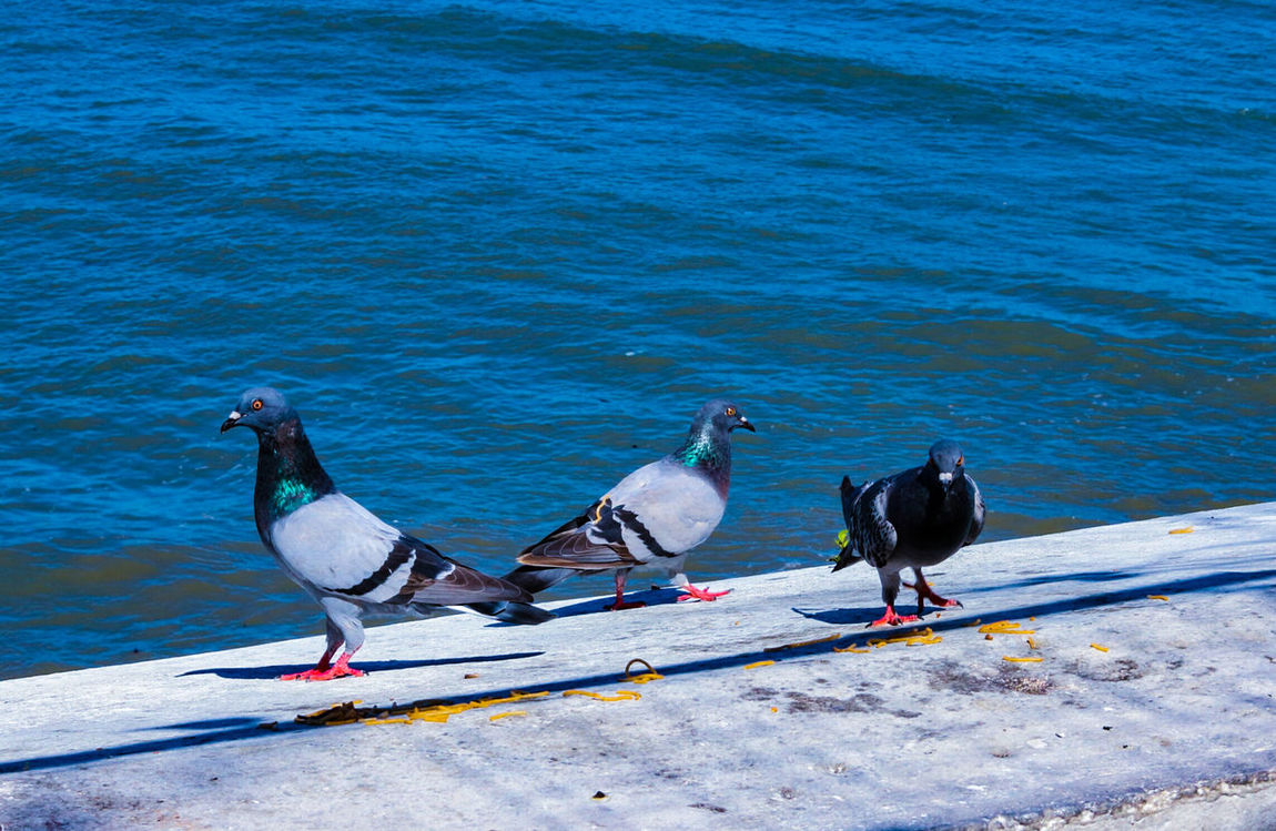 Bird Animals In The Wild Animal Wildlife Water No People Outdoors Day Nature Beach Sea Animal Themes Panama City Panama Harbor Panama City Panamá Close-up