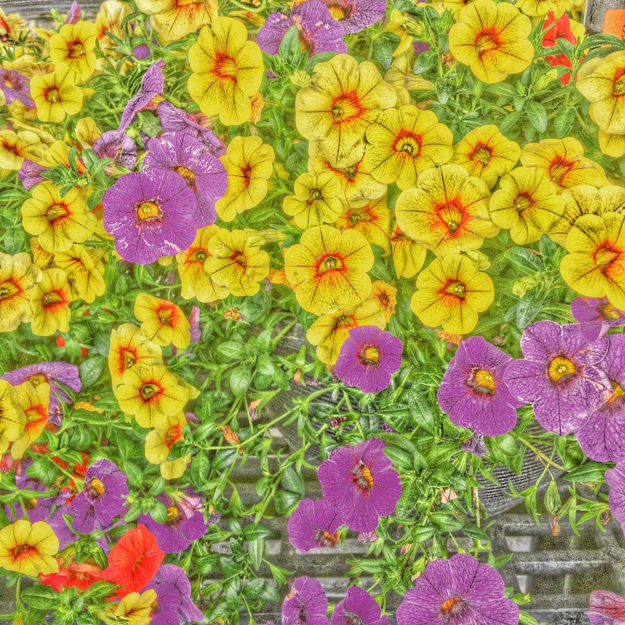 Flowers Camerafilters Check This Out Hello World Taking Photos Enjoying Life Iphonephotography Artistic Expression Color Photography Nature Spring Has Arrived Flowers, Nature And Beauty Spring Into Spring Relaxedand Happy Nature Perfect