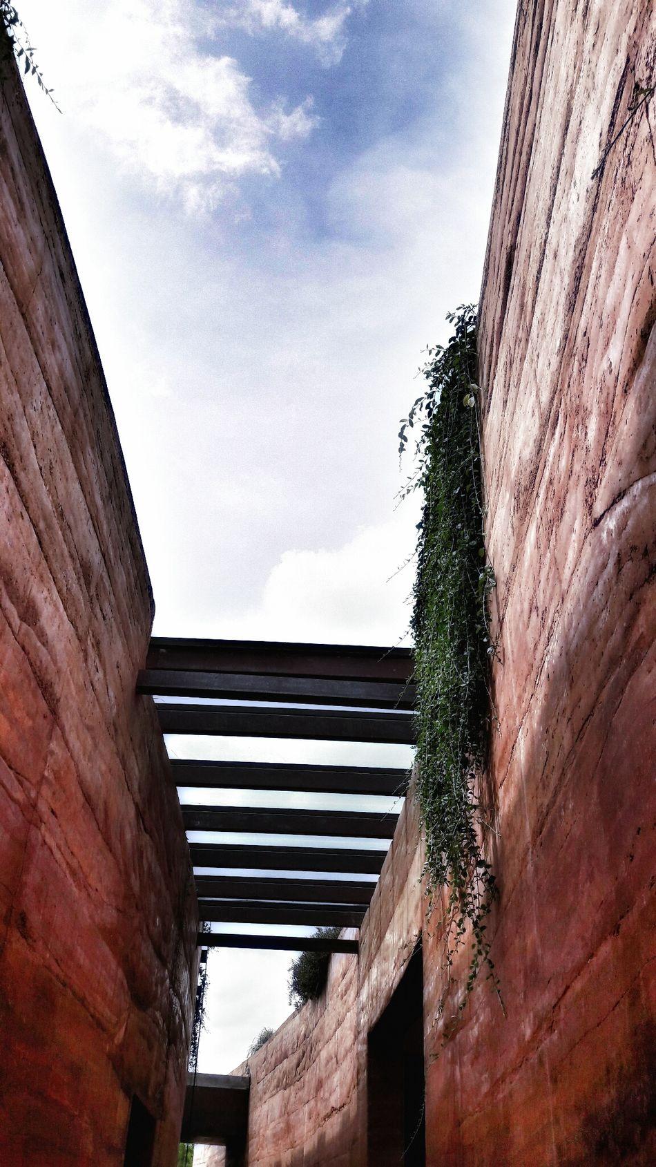 Love Thailand Wall Tree Sky Photooftheday Photographic Memory