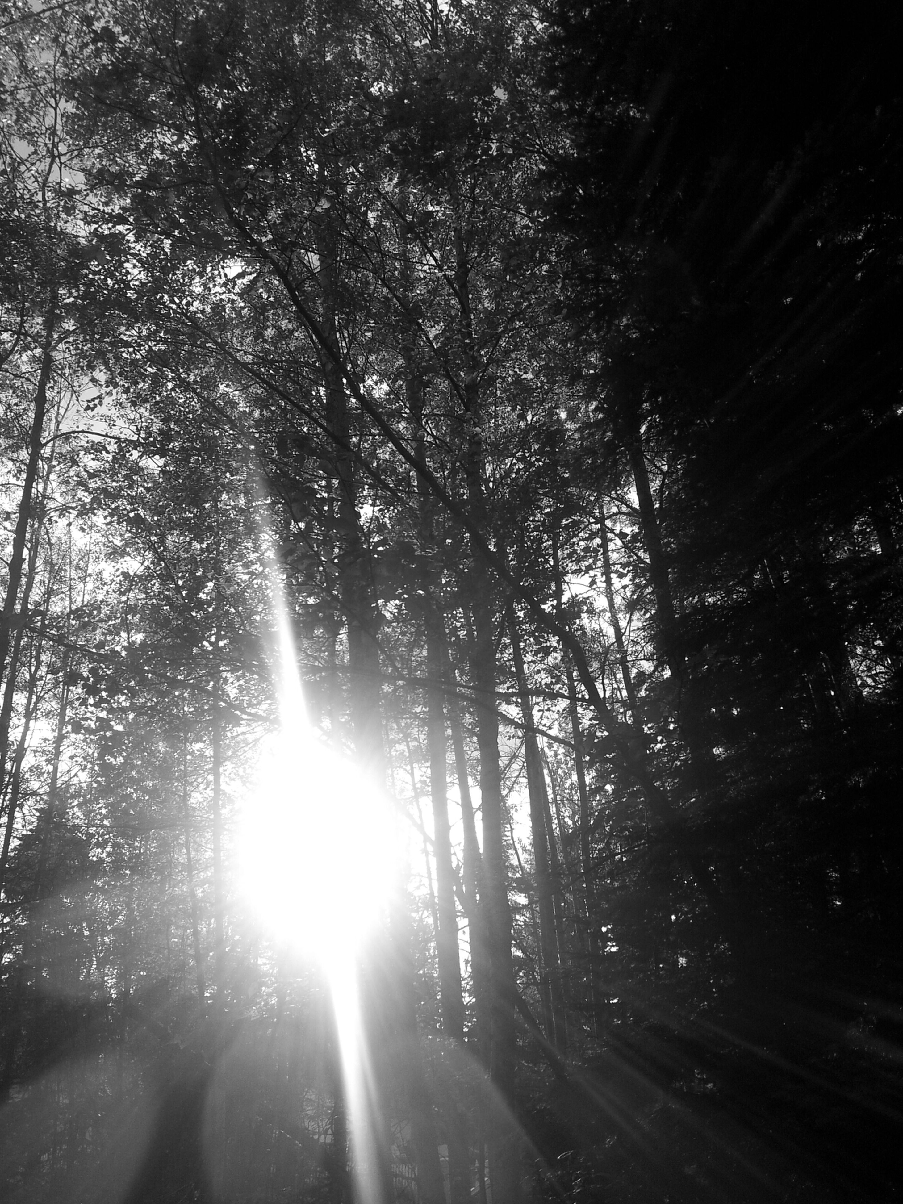 tree, silhouette, low angle view, growth, sunlight, nature, sunbeam, lens flare, night, branch, sun, outdoors, tranquility, forest, back lit, beauty in nature, no people, sky, glowing