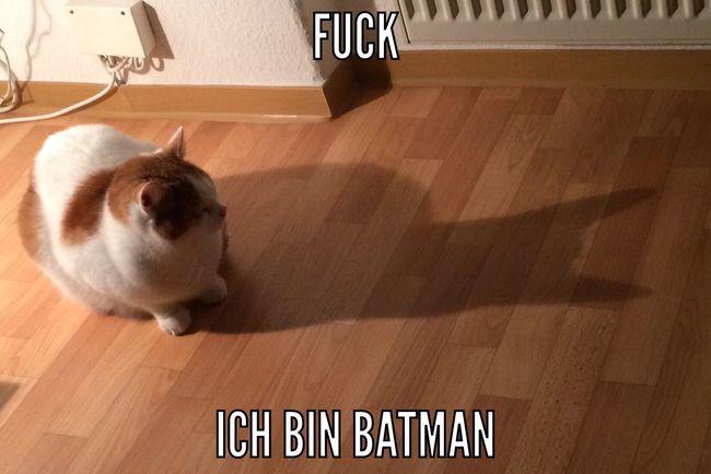 Katze Batman Cat