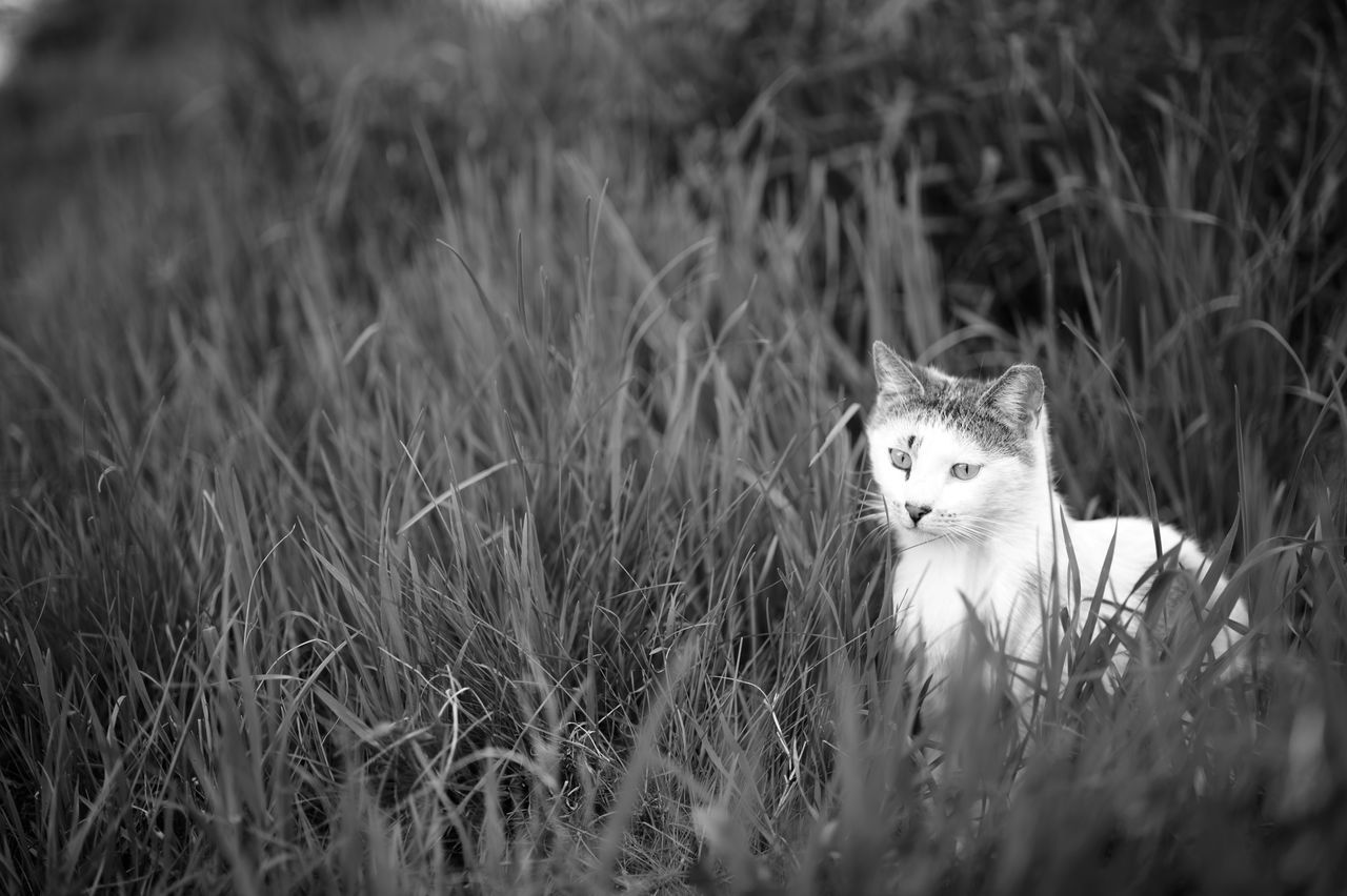 Stray Kitten in Grass II Animal Themes Black & White Black And White Blackandwhite Bokeh Cat Cats Day Domestic Cat Feline Focus On Foreground Grass Grassy Istanbul Istanbuldayasam Kitten Monochrome Nature One Animal Outdoors Pets Portrait Stray Cat