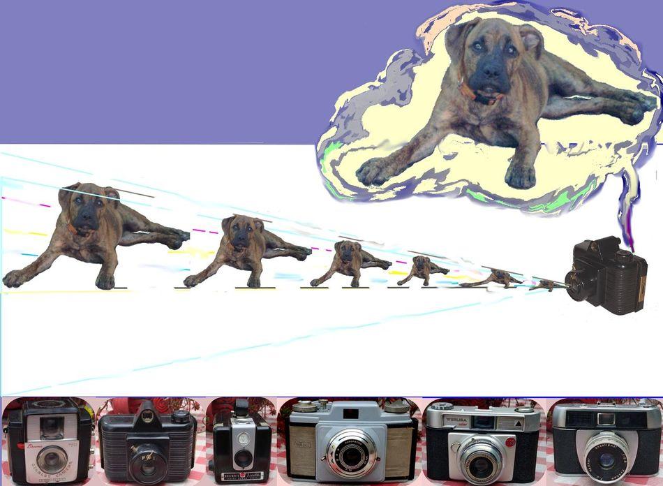 Amor Arte CreativePhotographer Digital Art Evolucion Fotografia Maquinas Principios