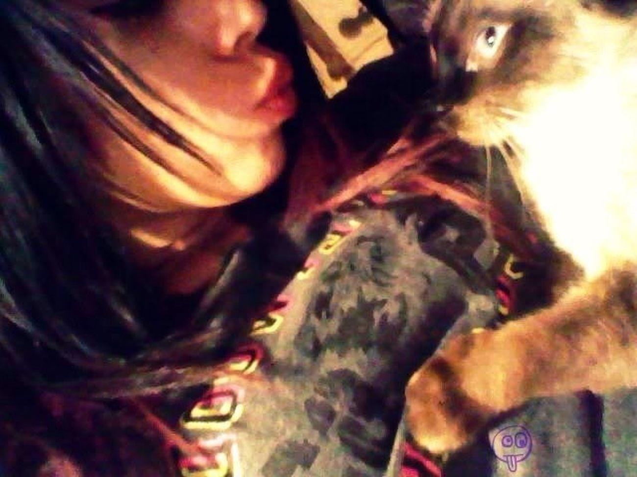 My Darling Cat
