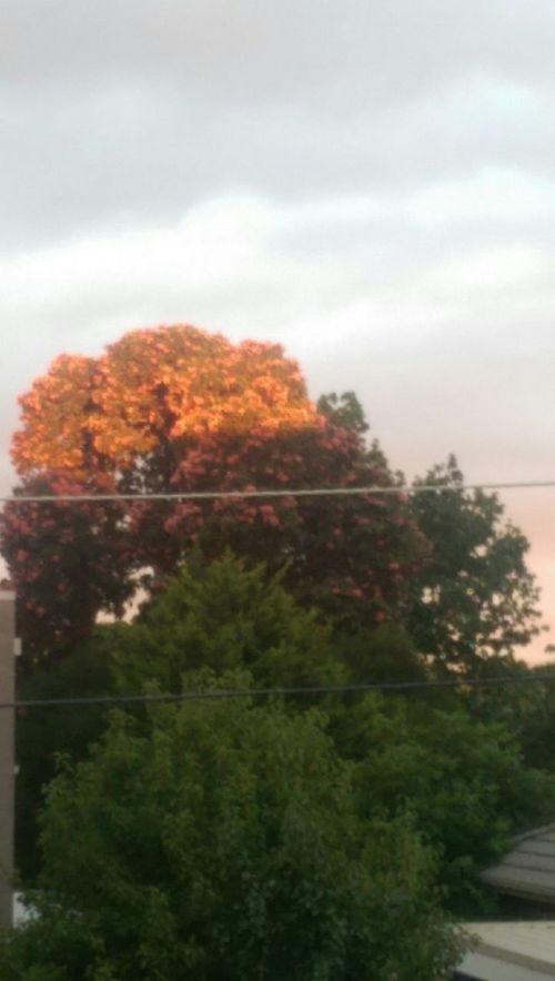 Thepuristnofilternoedit Noedit Nofilter Athome  Sunset Layers Colors Beautiful Nature Followme Lovephotography  EyeEm Nature Lover