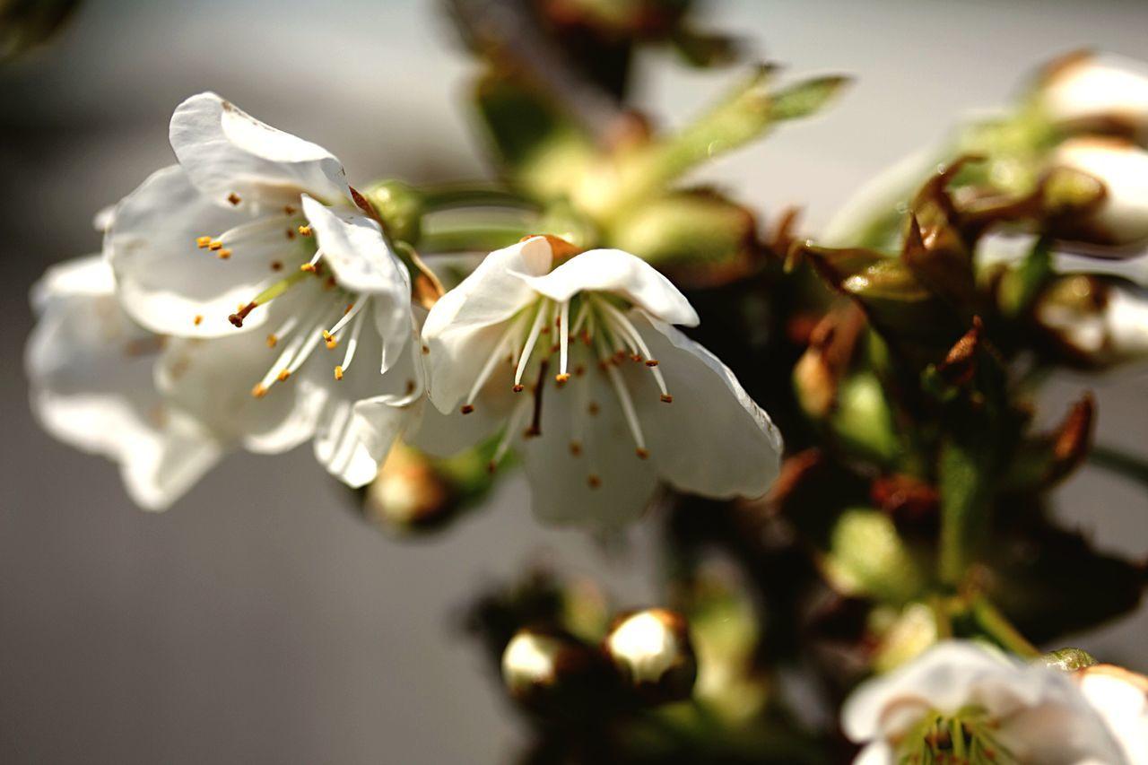 Bloemen Bloesems Lente Natuur Natuurfotografie
