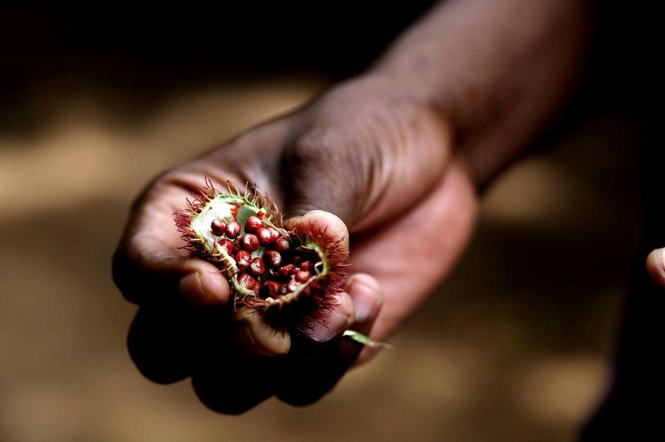 Beautiful stock photos of africa, Berry Fruit, Close-Up, Day, Food