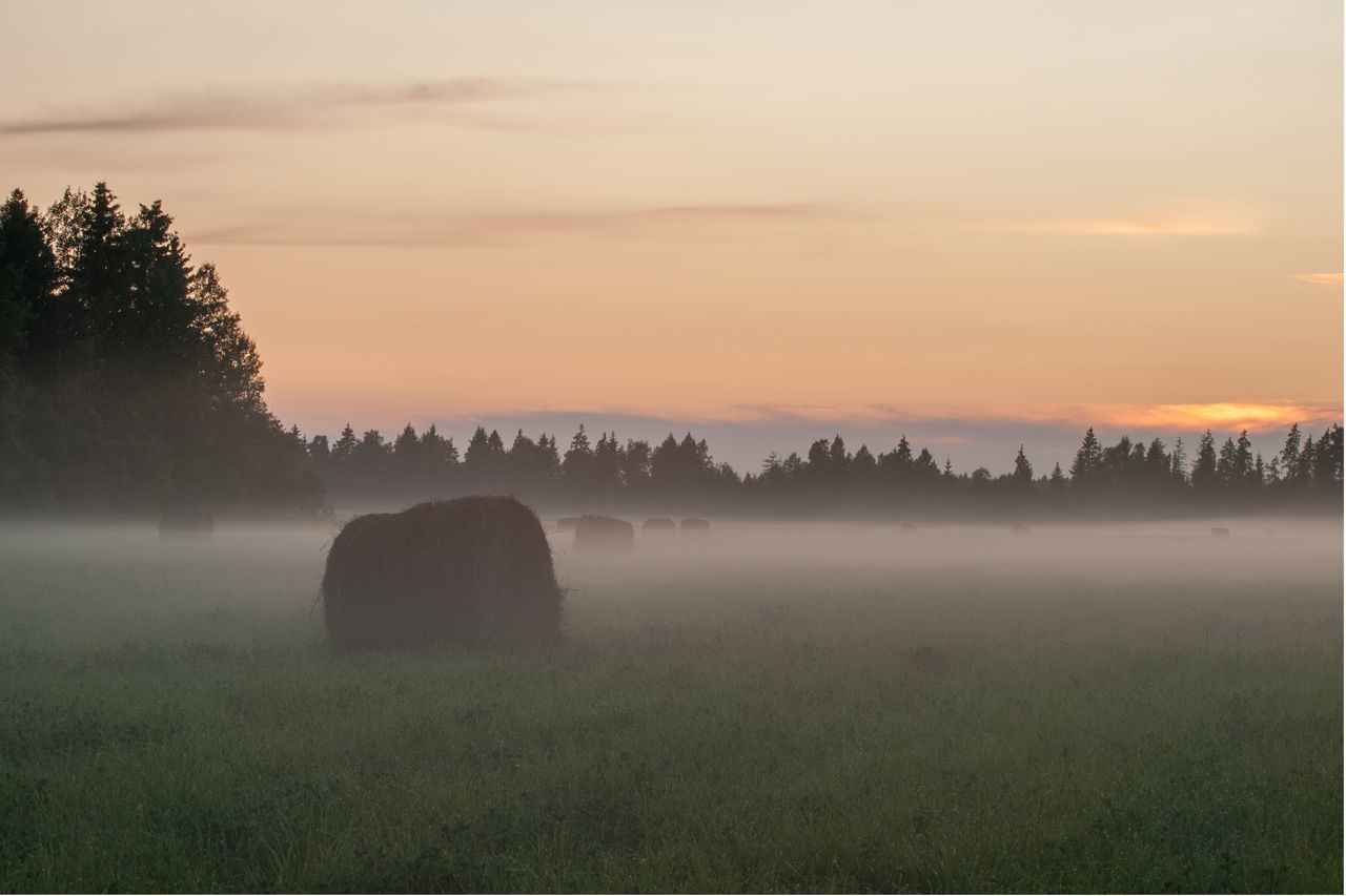 Agriculture Bale  Beauty In Nature Foggy Foggy Sunset Landscape Nature No People Outdoors Scenics Silhouette Sky Summers Evening Sunset Sunset_collection Tranquil Scene Tranquility Tree