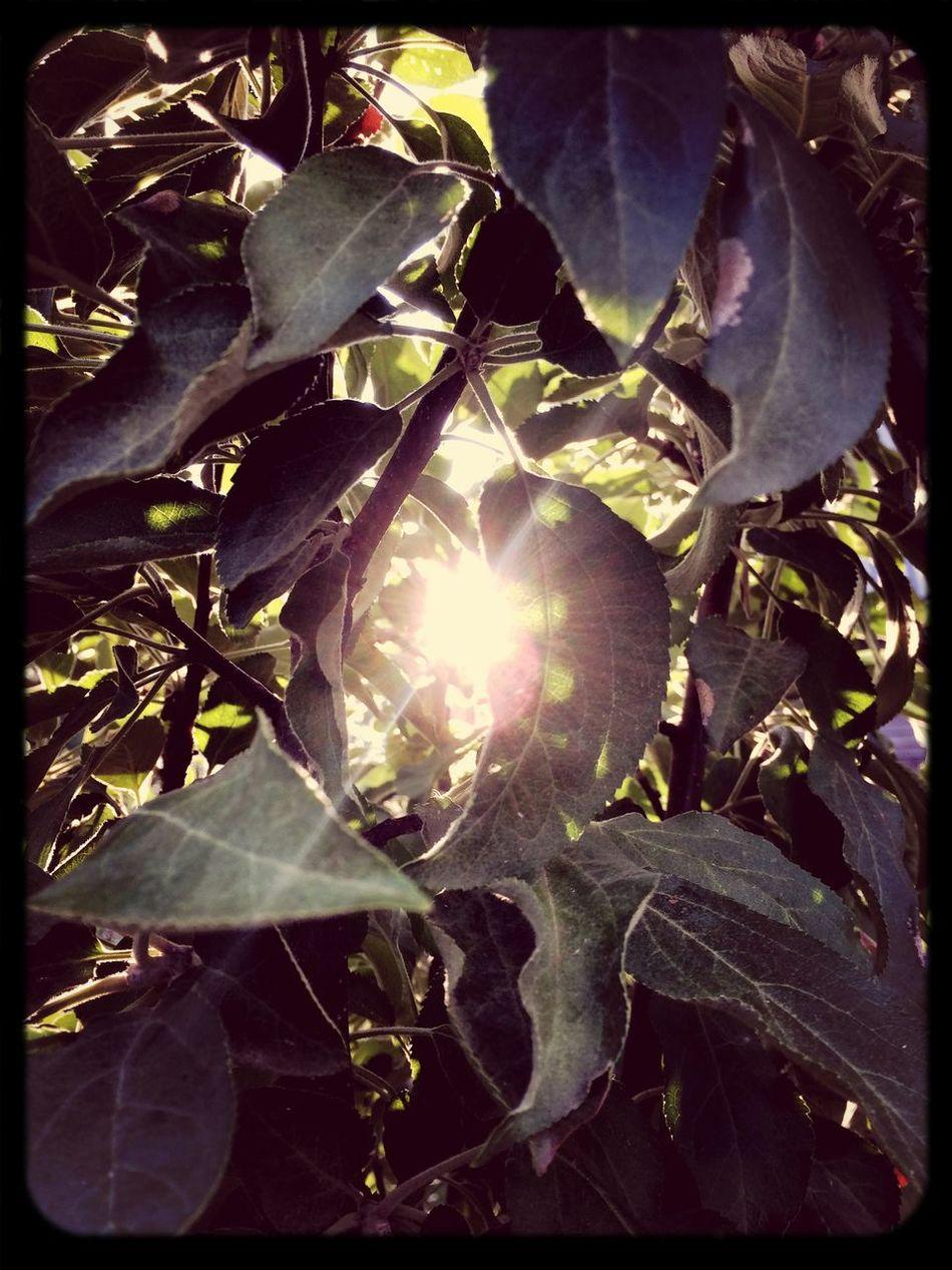 Sun Green листья солнце First Eyeem Photo