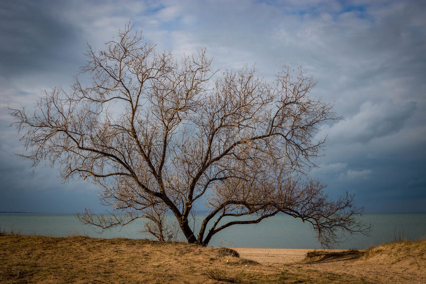 Travel Tree Bare Tree Beach Beauty In Nature Branch Cloud - Sky Clouds And Sky Day Landscape Lone Nature No People Outdoor Photography Outdoors Sea Sky Tranquility Tree