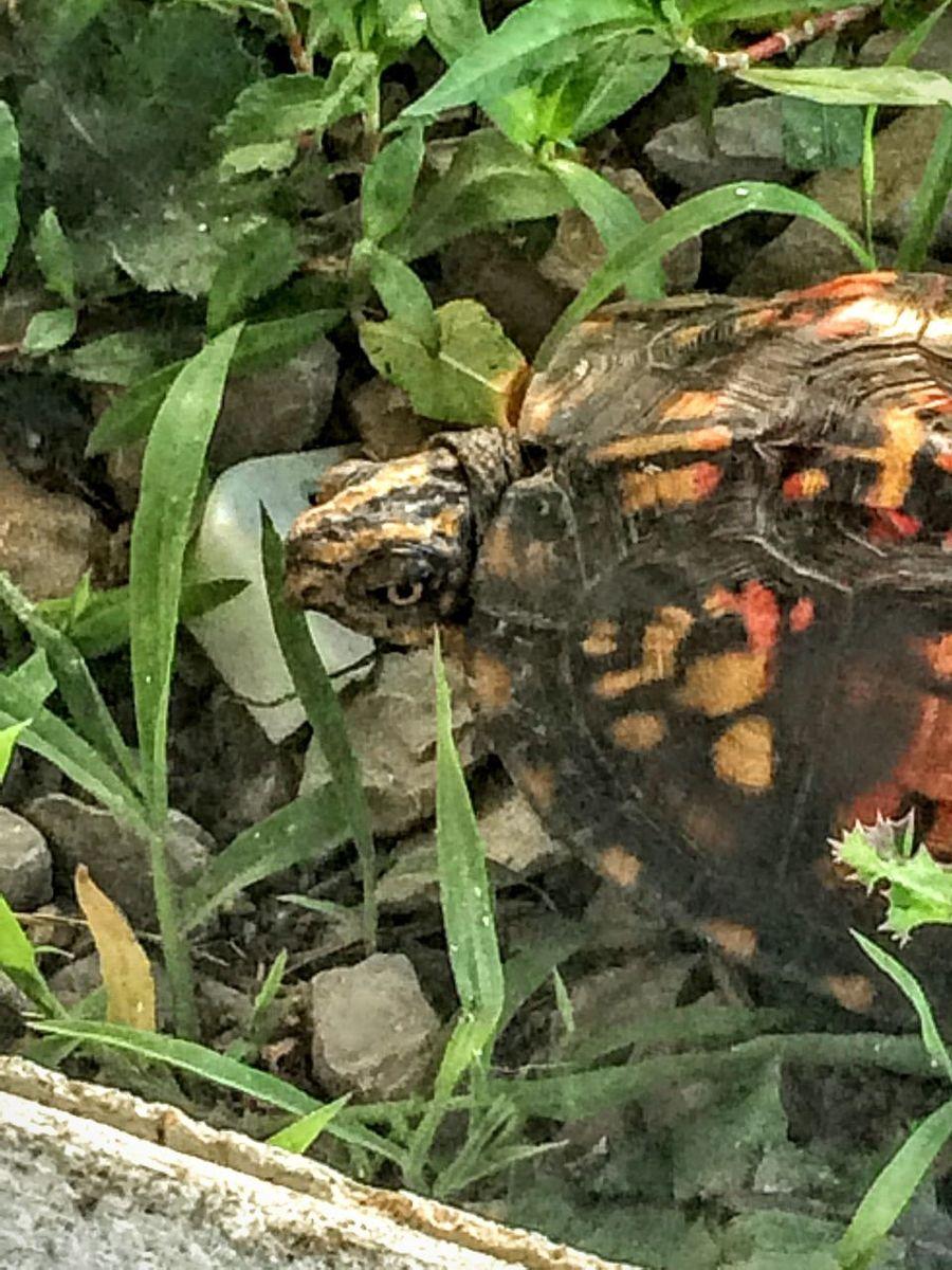 Turtle 🐢 Turtle Love Turtle Lifestyle Green Turtles