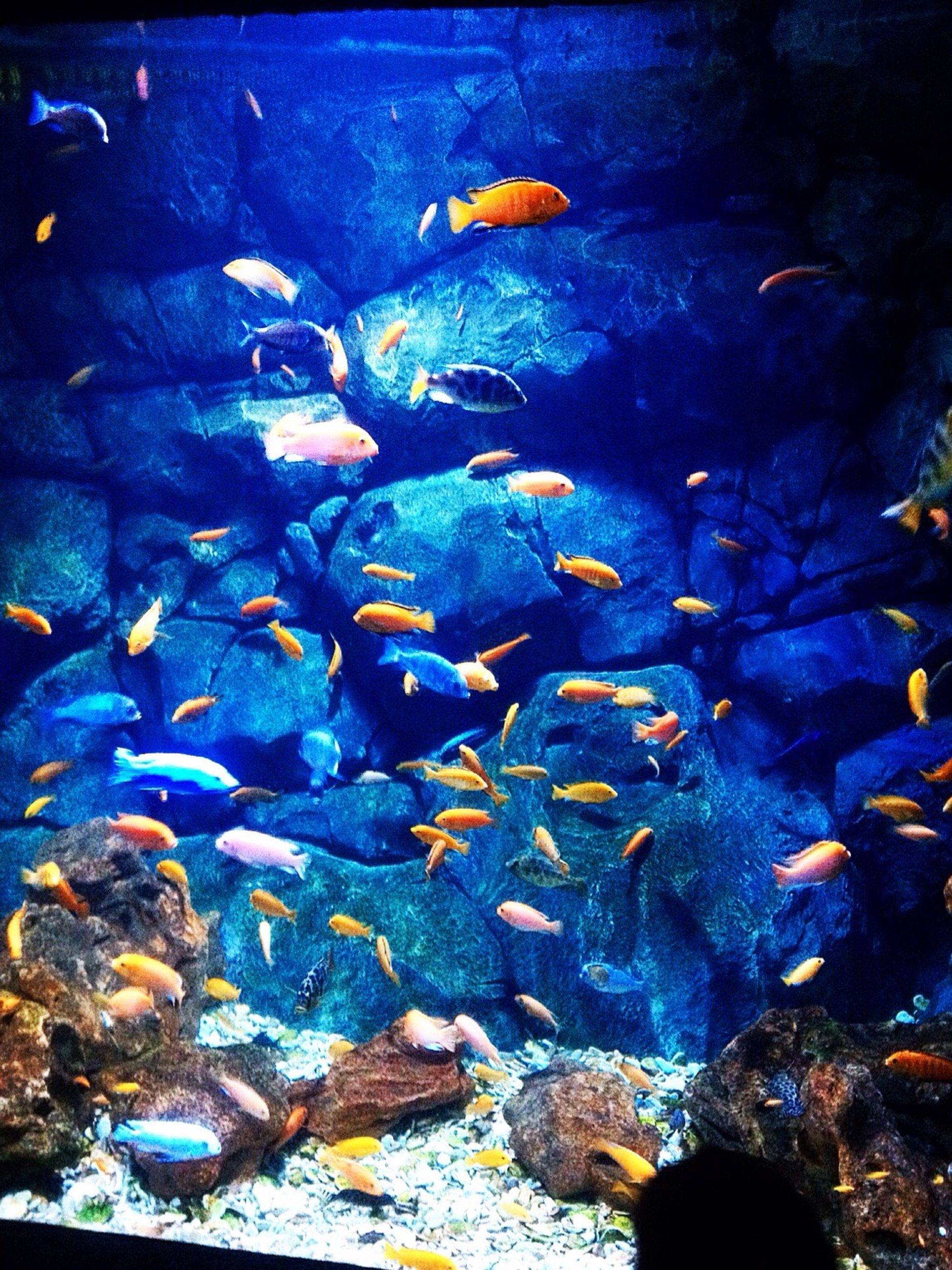 underwater, animal themes, water, sea life, swimming, fish, animals in the wild, wildlife, undersea, school of fish, rock - object, sea, aquarium, nature, blue, high angle view, coral, beauty in nature, stone - object