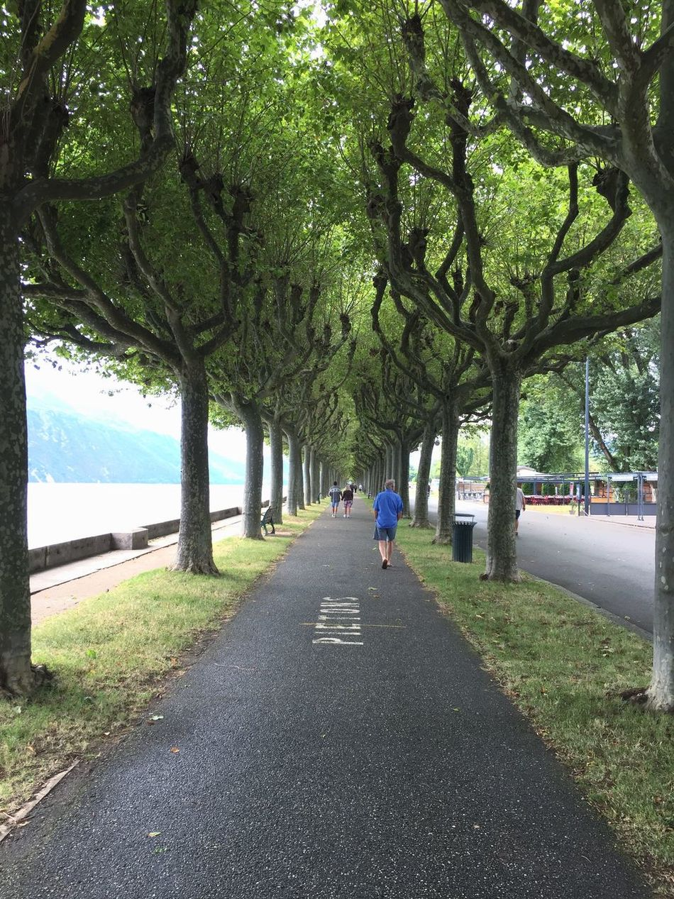 Aix Les Bains Lac Du Bourget Lakeside Trees Tree_collection  TreePorn Green Way