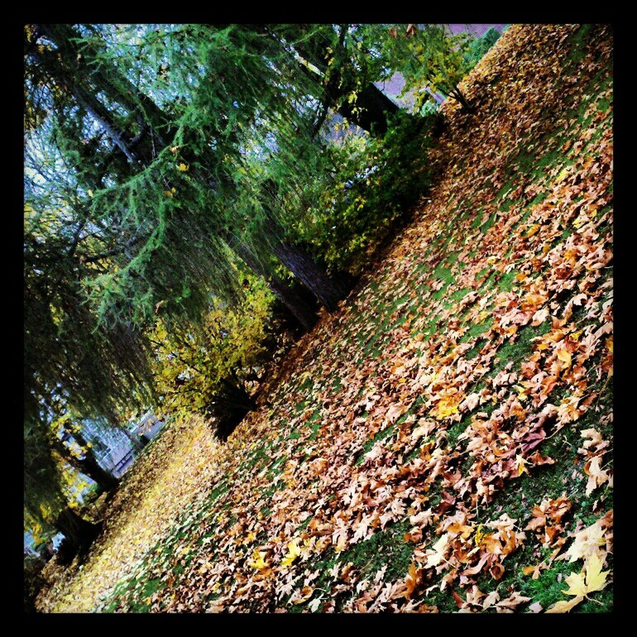 Fall... Landscape