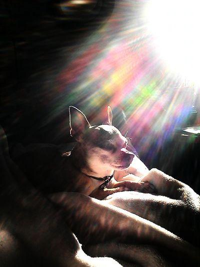 My Little Sunshine ♡
