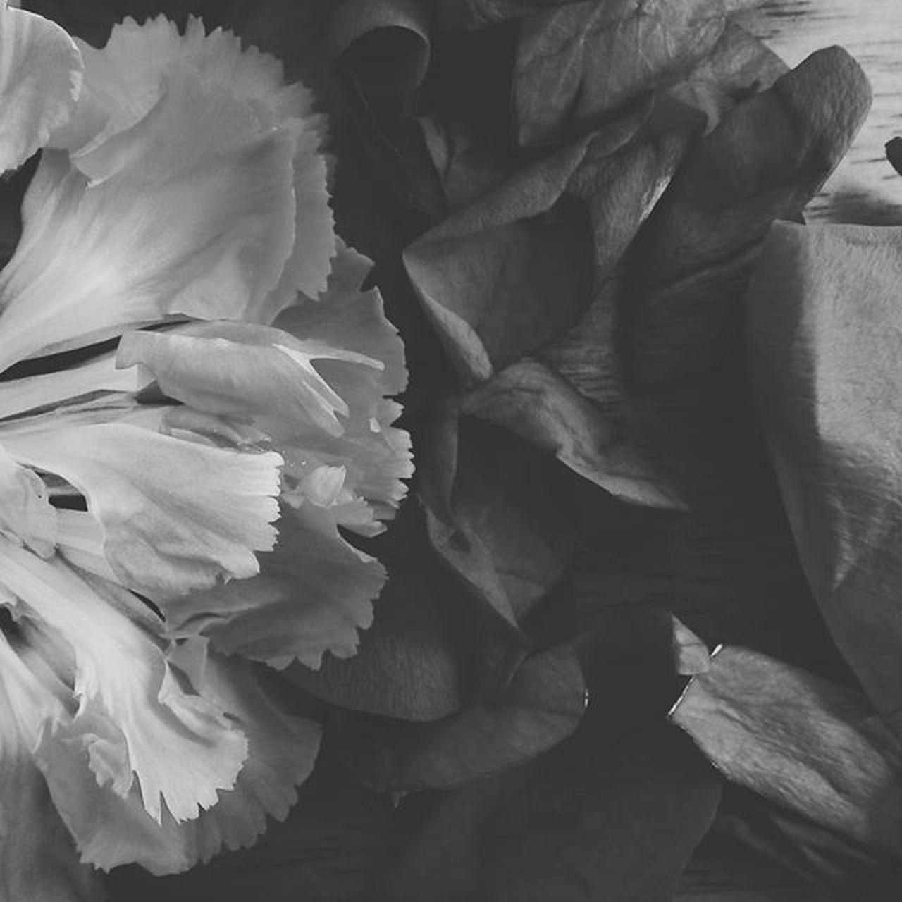 Blackandwhitephotography Art Flowers Rosepeddles Carnation