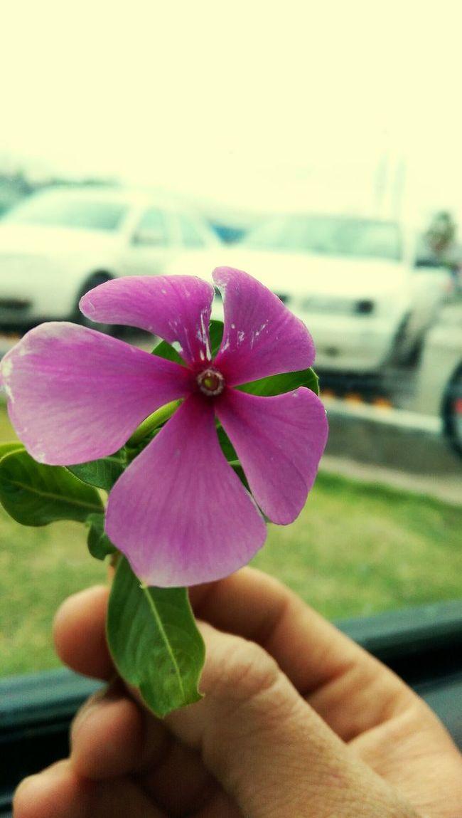 Una flor para otra flor... Flores Flowers Coahuila, México