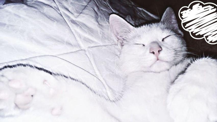 Hi! Check This Out Gatosfelizes Cheese! Gatos Hello World Gatos 😍 Hermoso Naturaleza🌾🌿 Hello World Cat Lovers Relaxing Cat♡ Hi! Cat Life