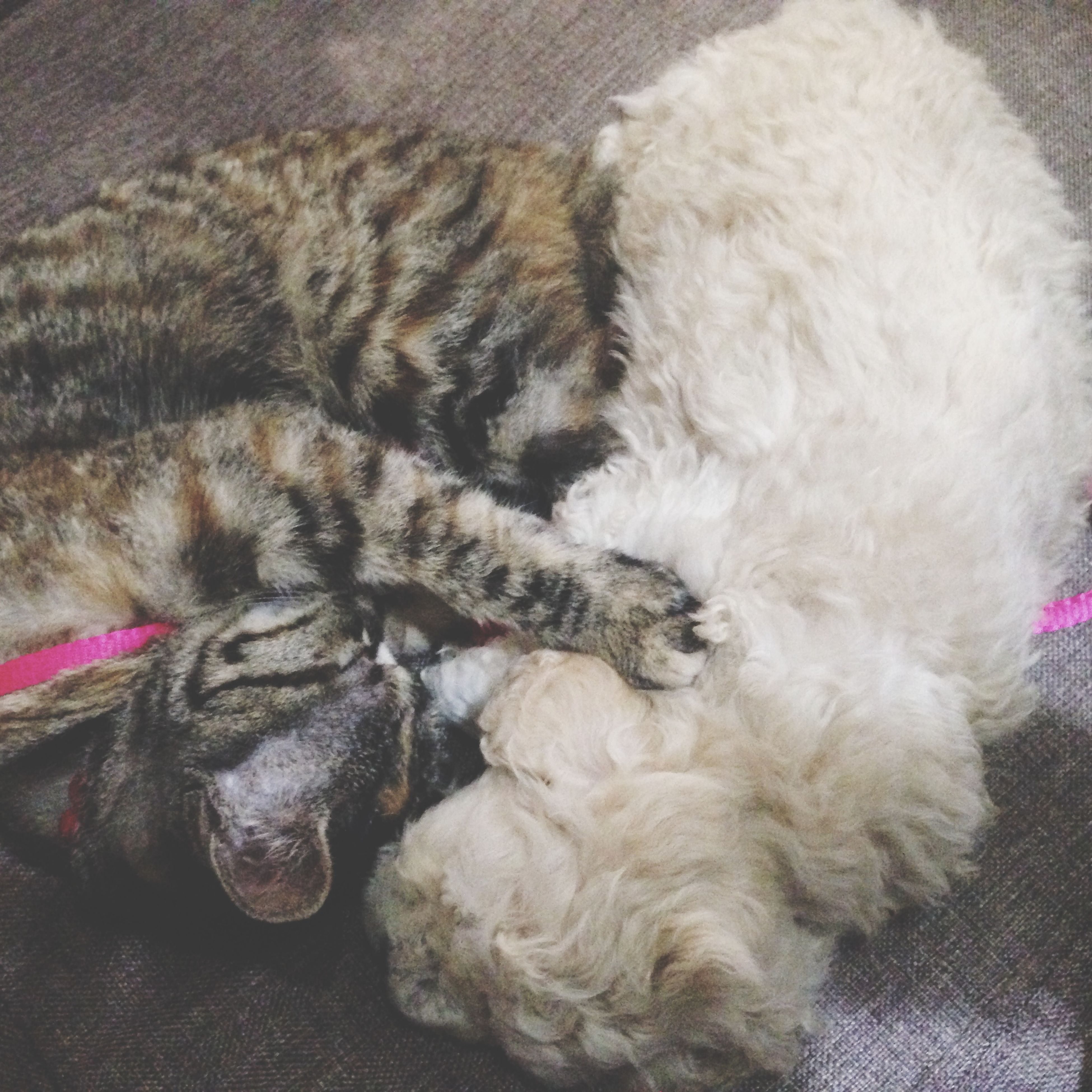 indoors, pets, domestic animals, animal themes, sleeping, mammal, one animal, relaxation, resting, domestic cat, high angle view, lying down, cat, bed, dog, home interior, comfortable, eyes closed, feline, no people
