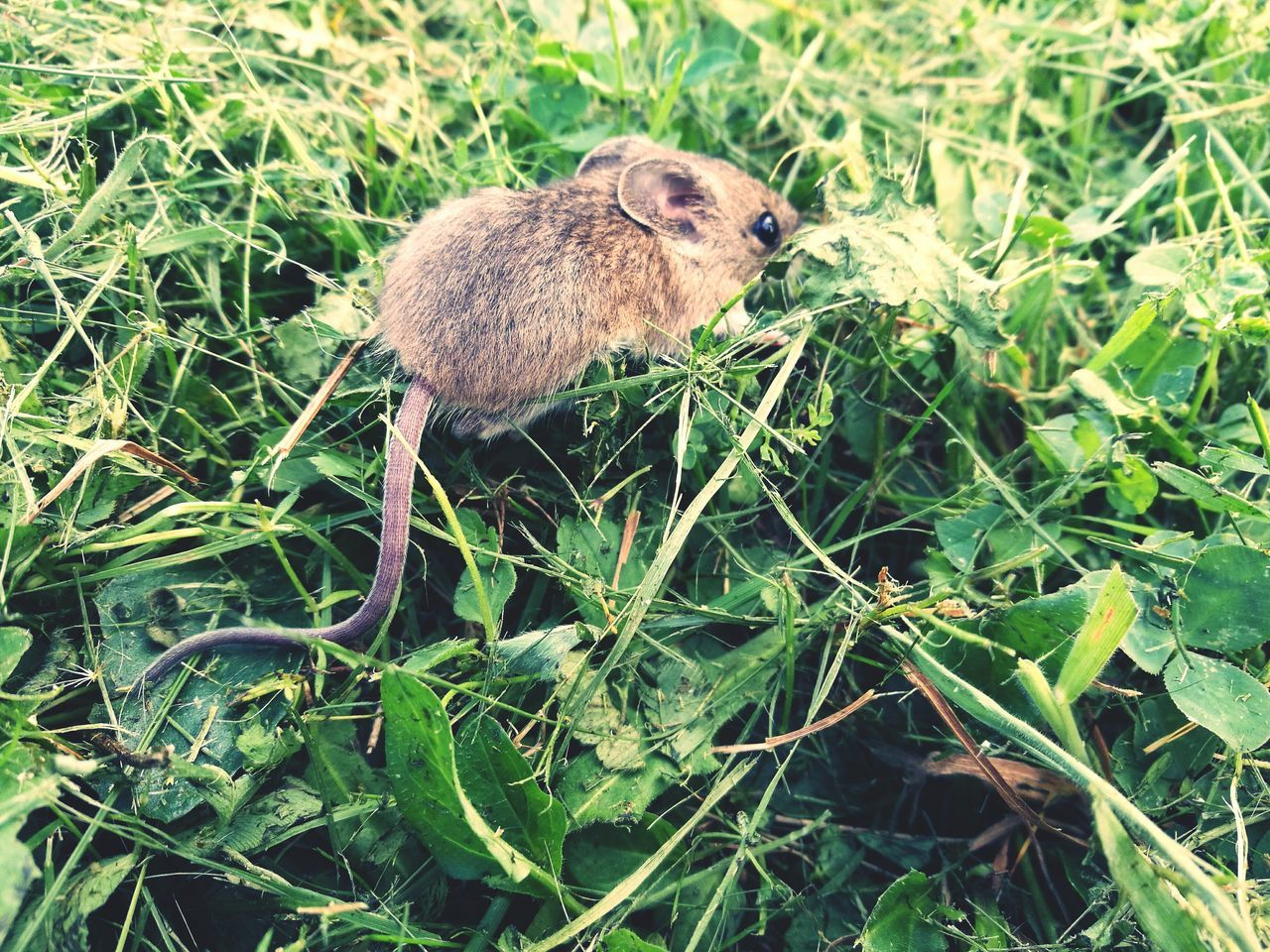 tiny....but so natural...mouse in a green field Enjoying Life Hello World Check This Out Taking Photos Hi! Please...save The Planet