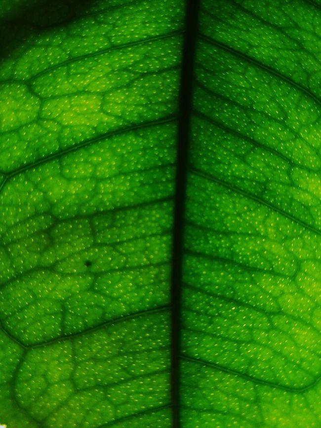 Learn & Shoot: Simplicity Orange Leaf,
