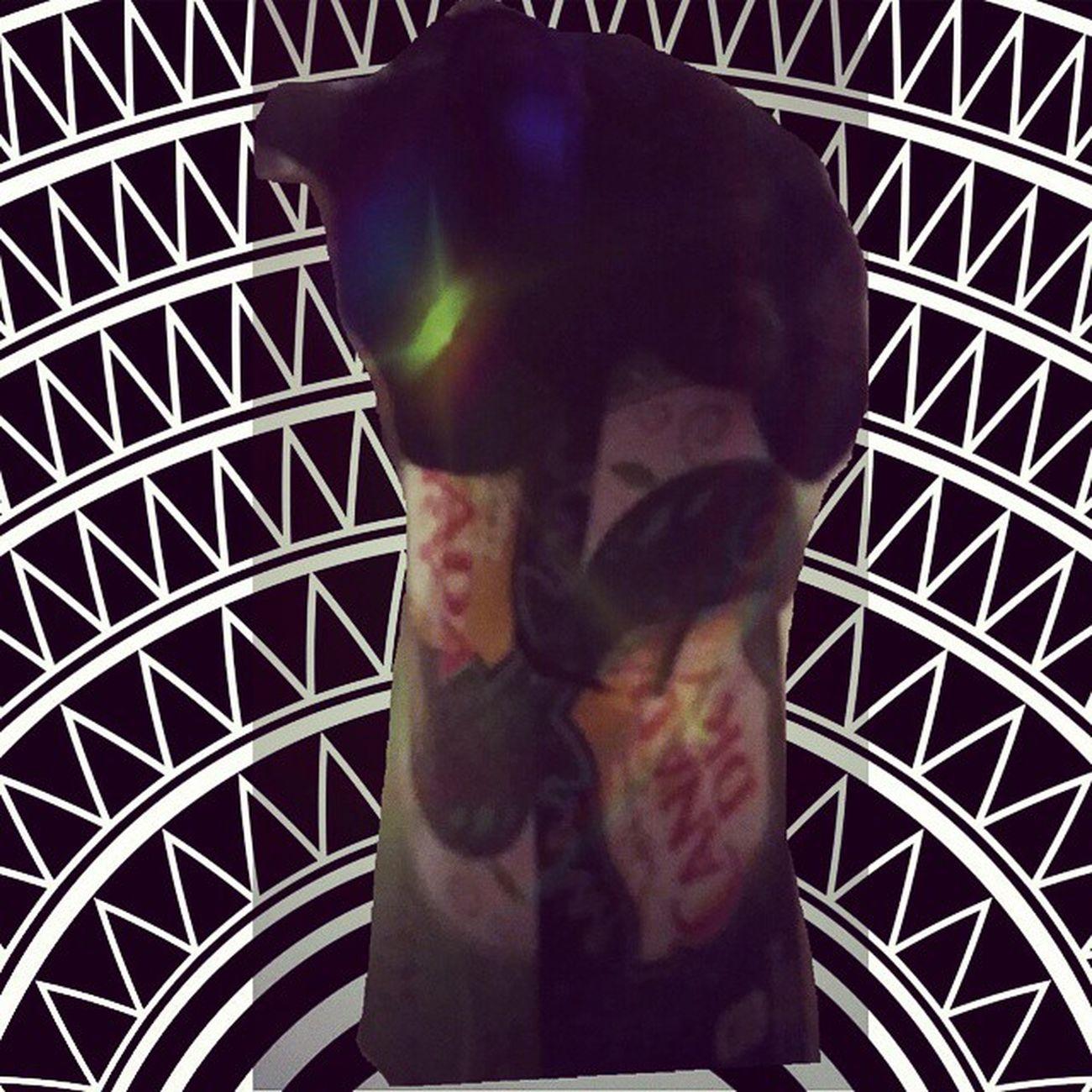 Bagherrah in deep meditation in his box ??? Zencats Catsofinstagram Cats Fiercefelines blackcats familiar babyboy catscatscats bagheerah gypsycats lazycatdaze instacats furbaby instagood mysticcats
