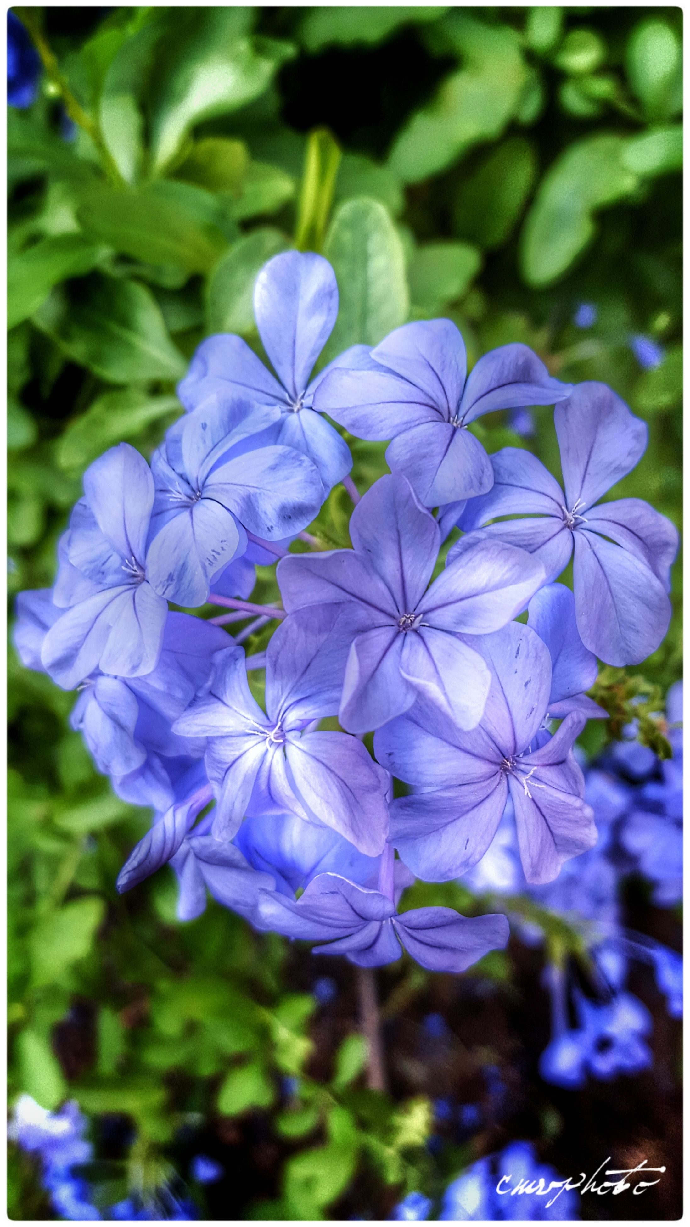 flower, beauty in nature, nature, fragility, purple, growth, petal, freshness, plant, no people, focus on foreground, day, outdoors, close-up, flower head, blooming