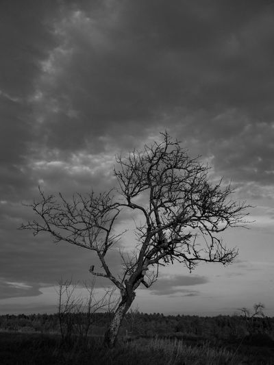 Monochrome Black And White Autumn Sky Outdoors Field Tree Cloud - Sky Nature Landscape Grass Plant Botany
