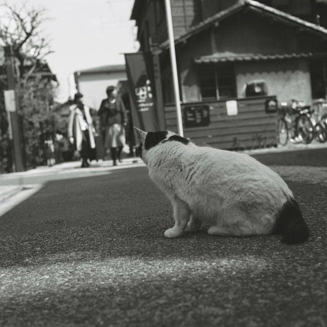 Cat Streetphotography Taking Photos Tokyo Ueno Hello World Rolleicord Film Photography Film ローライコード EyeEm Best Shots Eyeemphotography 6×6