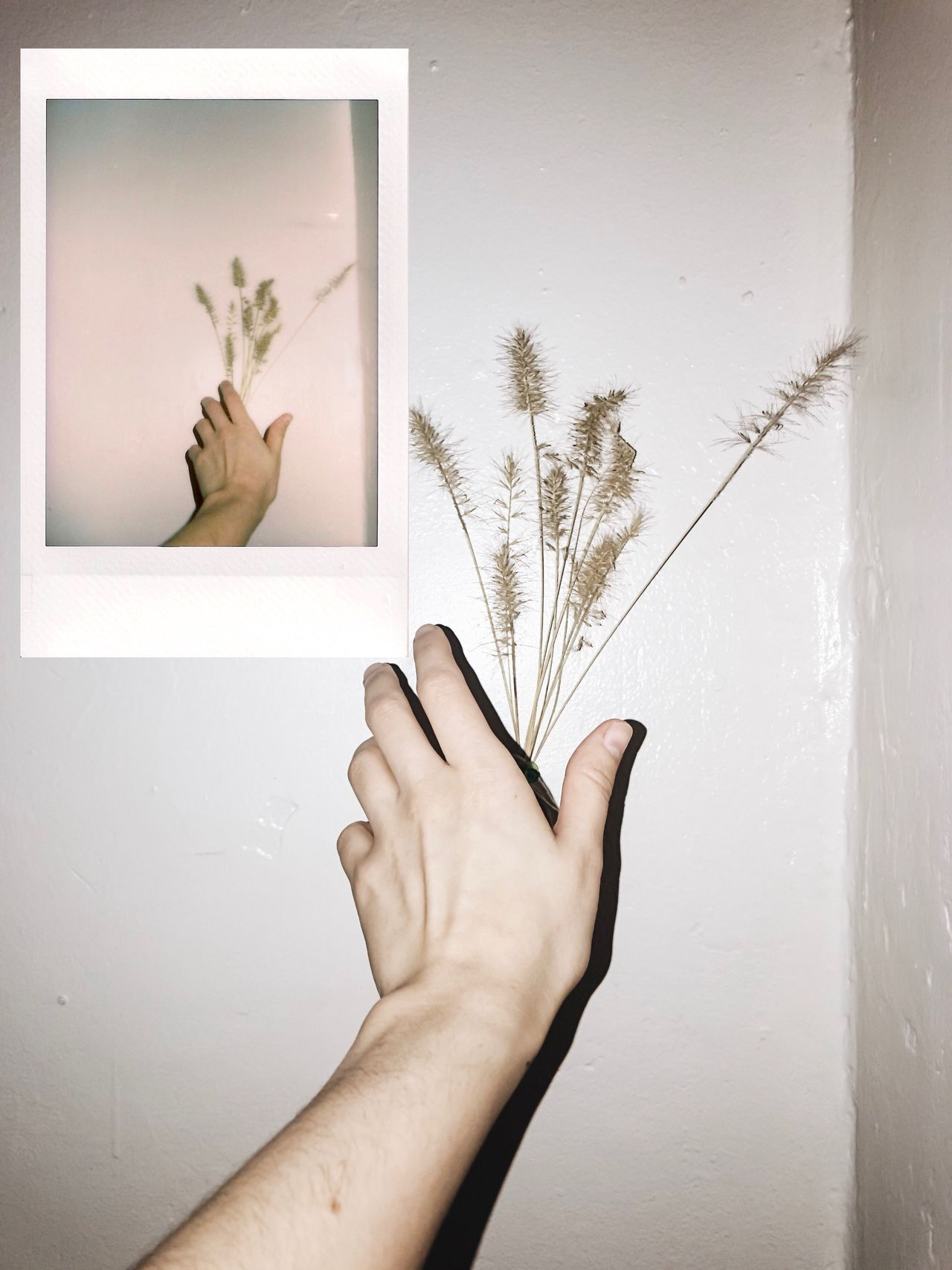Instant Photo A Day Film Photography Film Film Is Not Dead Human Hand Human Body Part One Person Real People Indoors  Day
