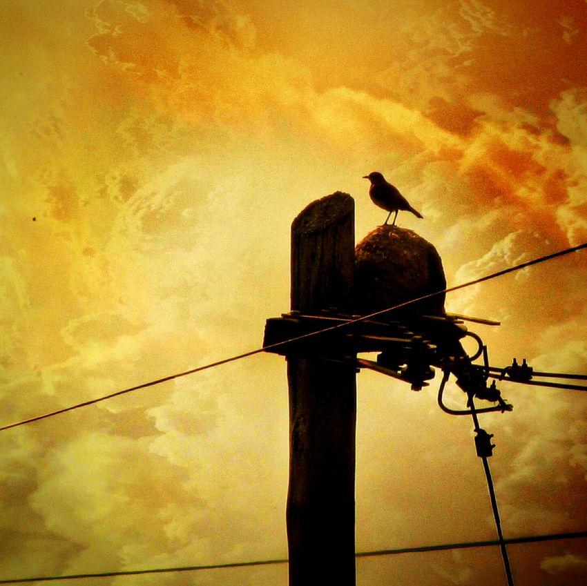 Vigia.🐤 Pajaro Hornero Silueta Cielo Nubes Bird Silhouette Sky Skyporn Skylovers Clouds And Sky Clouds Cloudporn Snapseed